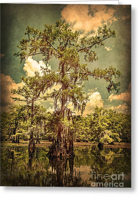 Ancient Cypress In Caddo Lake Greeting Card by Tamyra Ayles