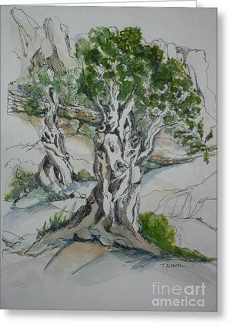 Ancient Olive Grove Greeting Card