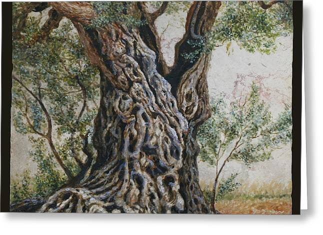 Ancient Olive Tree Trunk Greeting Card by Miki Karni