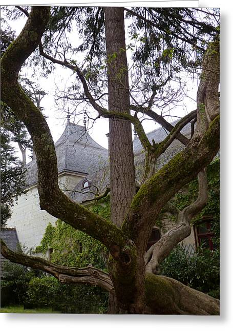 Ancient Tree At Chateau De Chenonceau Greeting Card