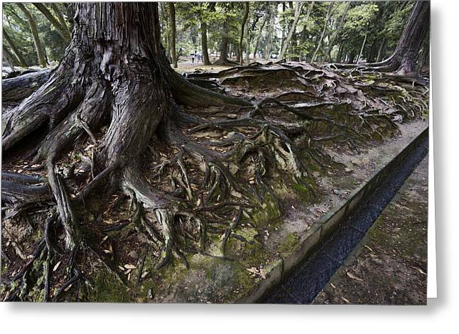 Ancient Trees Of Nara Park Greeting Card by Daniel Hagerman