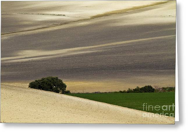 Andalusian Farmland Series-1 Greeting Card by Heiko Koehrer-Wagner