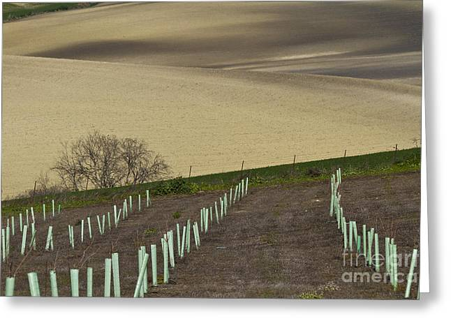 Andalusian Farmland Series-4 Greeting Card by Heiko Koehrer-Wagner