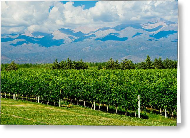 Andes Vineyard Greeting Card