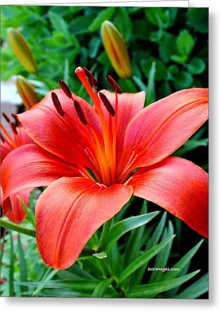 Andrea's Lily Greeting Card