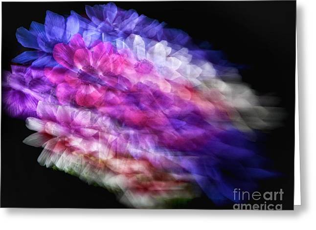 Anemone Abstract Greeting Card by Claudia Kuhn