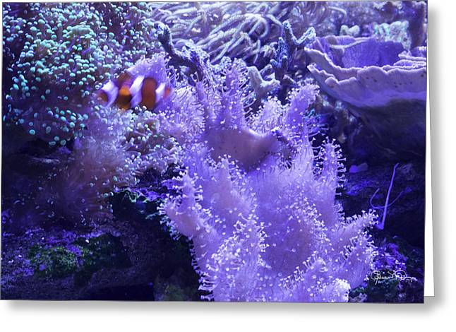 Anemone Starlight Greeting Card