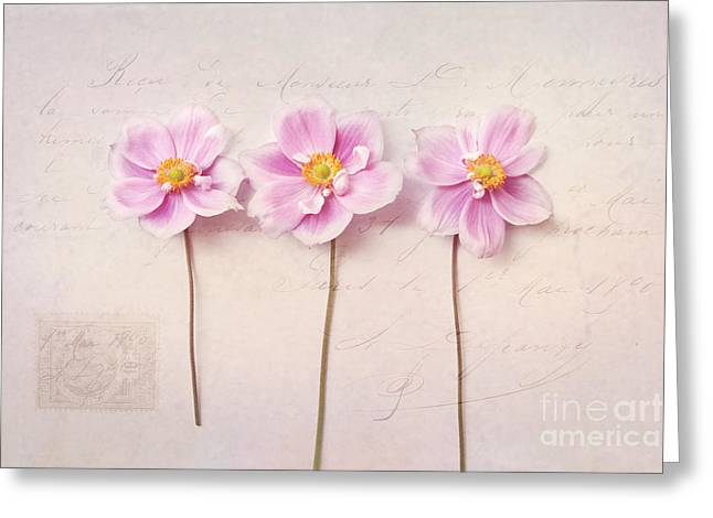 Anemone Trio Greeting Card by Sylvia Cook