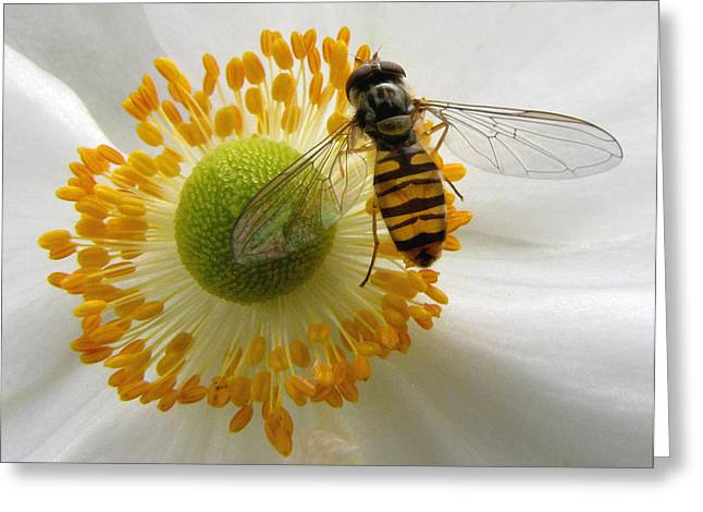 Anemone With Visitor Greeting Card by Jacqi Elmslie