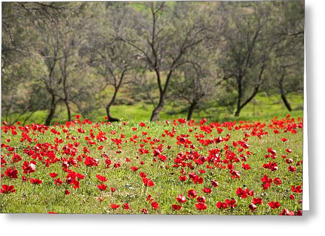 At Ruchama Forest Israel Greeting Card