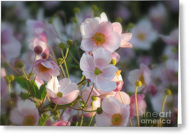 Anemones Soft Beauty Greeting Card by France Laliberte