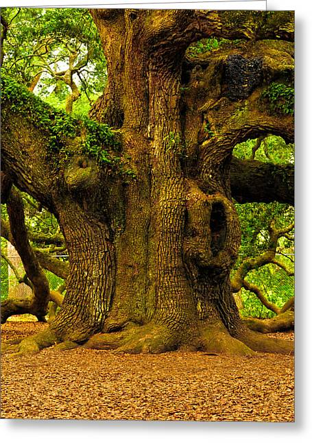 Greeting Card featuring the photograph Angel Live Oak Trunk by Louis Dallara