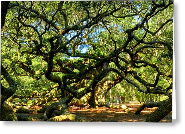 Angel Oak 006 Greeting Card by Lance Vaughn