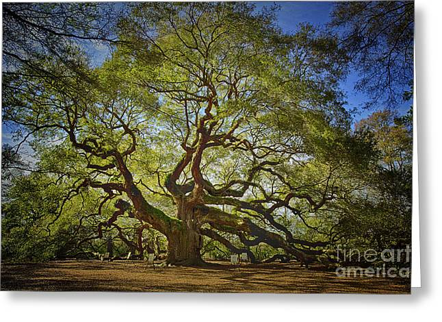 Angel Oak Greeting Card by Carrie Cranwill