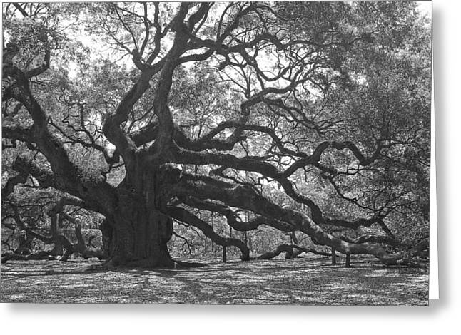 Angel Oak II - Black And White Greeting Card by Suzanne Gaff