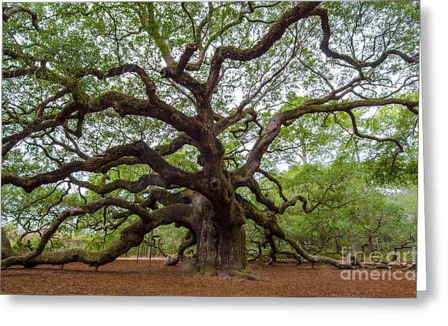 Greeting Card featuring the photograph Angel Oak Tree by Dale Powell