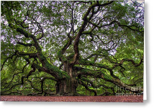Angel Oak Tree Greeting Card by Douglas Stucky