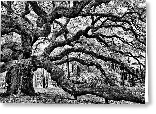 Greeting Card featuring the photograph Angel Oak Tree Ir Hdr by Louis Dallara