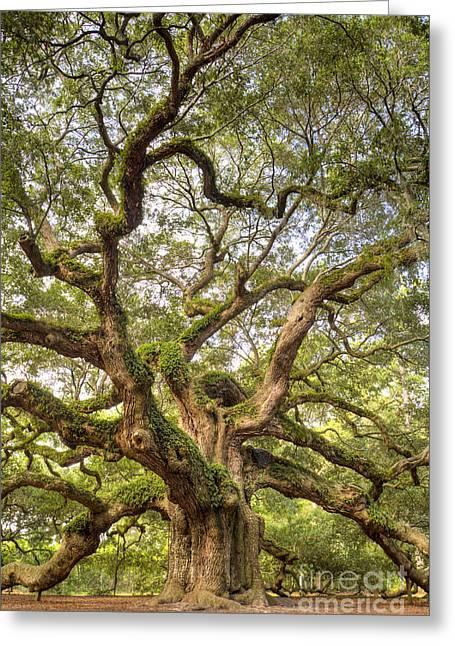 Angel Oak Tree Johns Island Sc Greeting Card