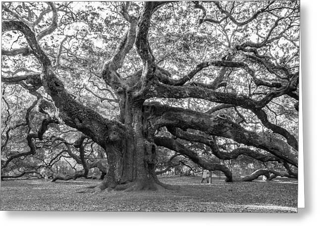 Angel Oak Tree Greeting Card by Patricia Schaefer