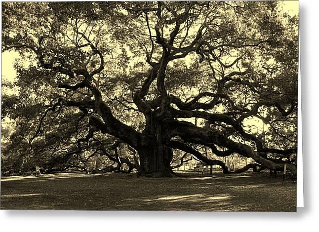 Angel Oak Tree Sepia Greeting Card by Susanne Van Hulst