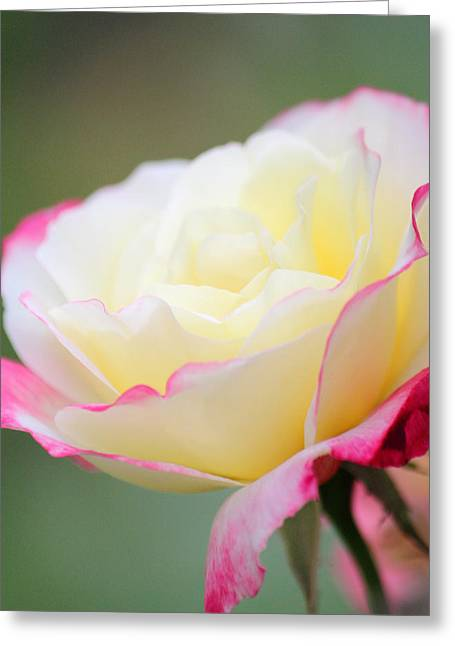 Angel Of Roses Greeting Card