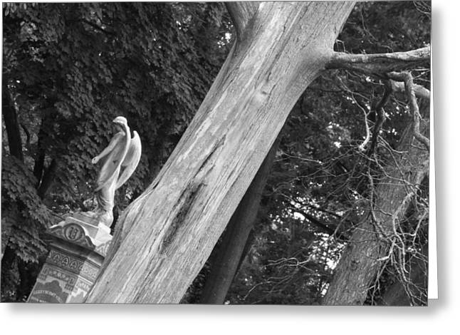 Greeting Card featuring the photograph Angel by Steven Macanka