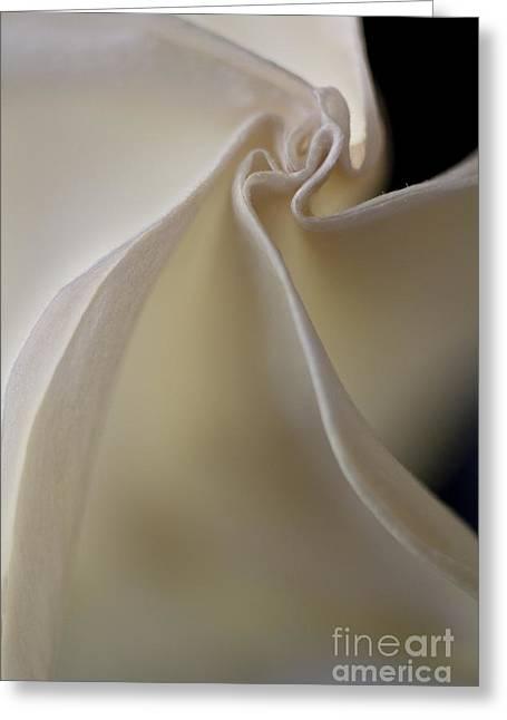 Angel Trumpet Greeting Card by Elena Nosyreva