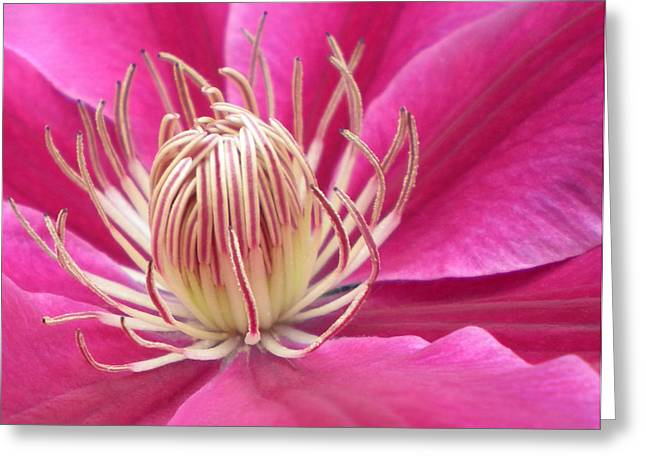 Angela Clematis Macro Fine Art Print Greeting Card