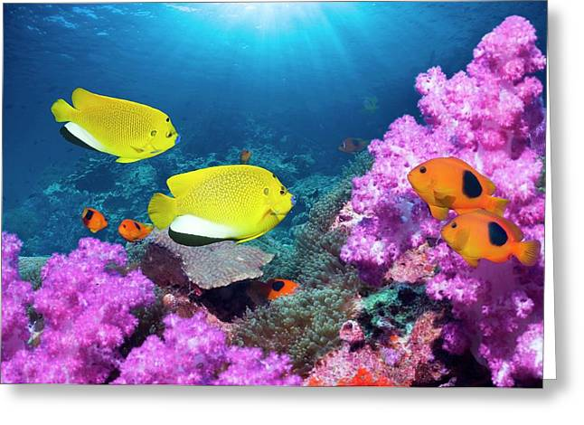 Angelfish And Anemonefish On A Reef Greeting Card by Georgette Douwma