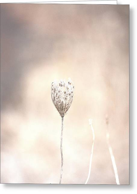 Greeting Card featuring the photograph Angel's Touch by The Art Of Marilyn Ridoutt-Greene