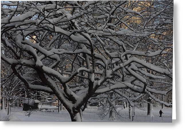 Greeting Card featuring the photograph Angular Tree With Snow by Winifred Butler