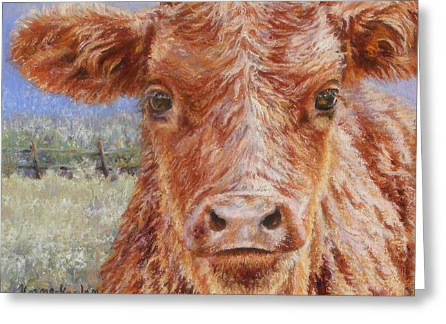 Angus Calf Norman IIi Greeting Card
