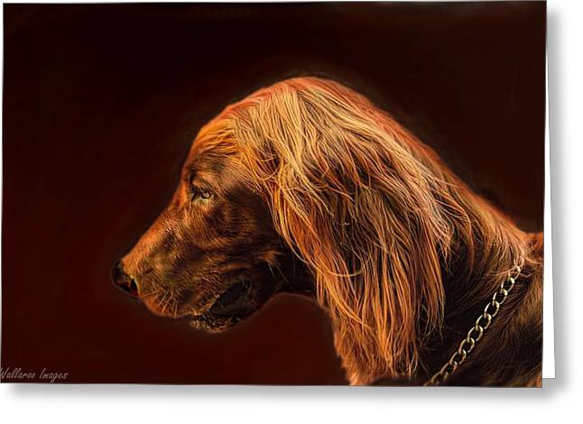 Angus Irish Red Setter Greeting Card by Wallaroo Images