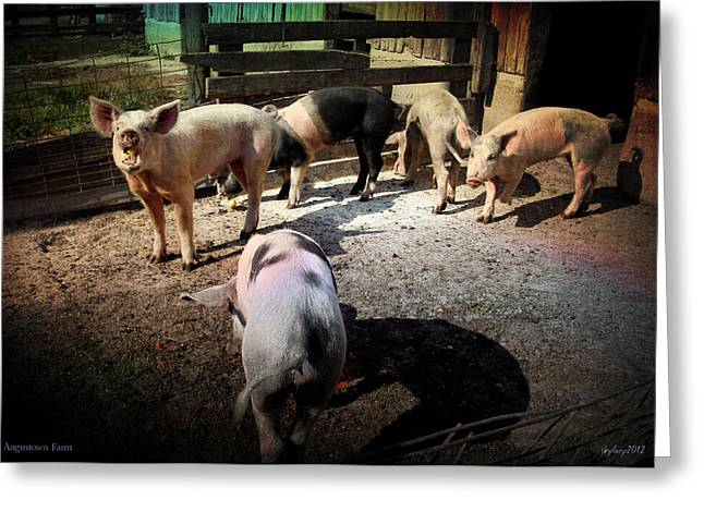 Greeting Card featuring the photograph Angustown Piggies by Cynthia Lassiter