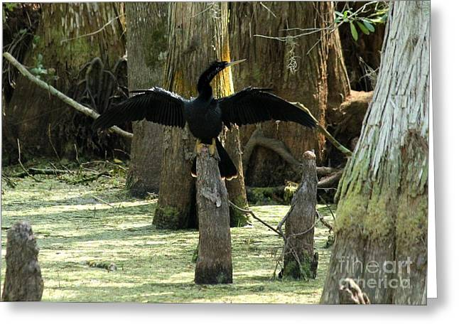 Anhinga At Rest Greeting Card by Theresa Willingham