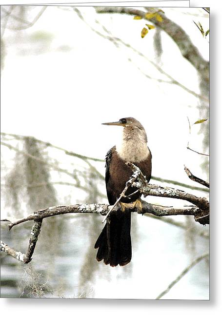 Anhinga On A Misty Morning Da Greeting Card