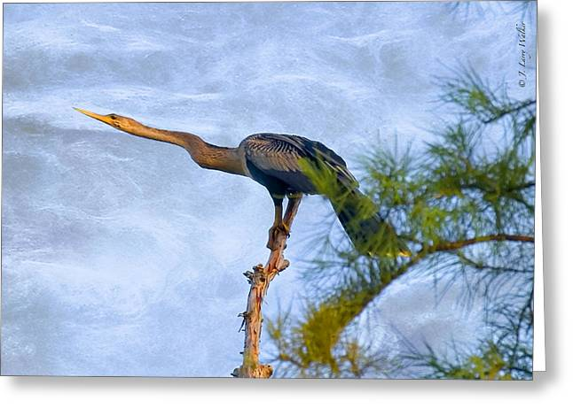 Anhinga Resting Atop Cypress Greeting Card by J Larry Walker
