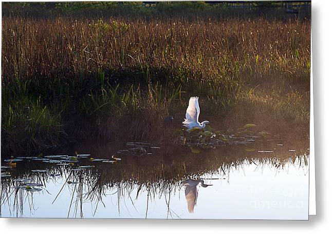 Anhinga Trail Sunrise Greeting Card by Bruce Bain