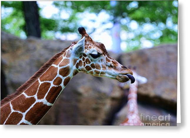 Animal - Giraffe - Sticking Out The Tounge Greeting Card by Paul Ward