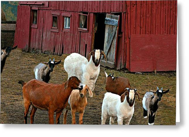 Animal House Greeting Card by Diana Angstadt