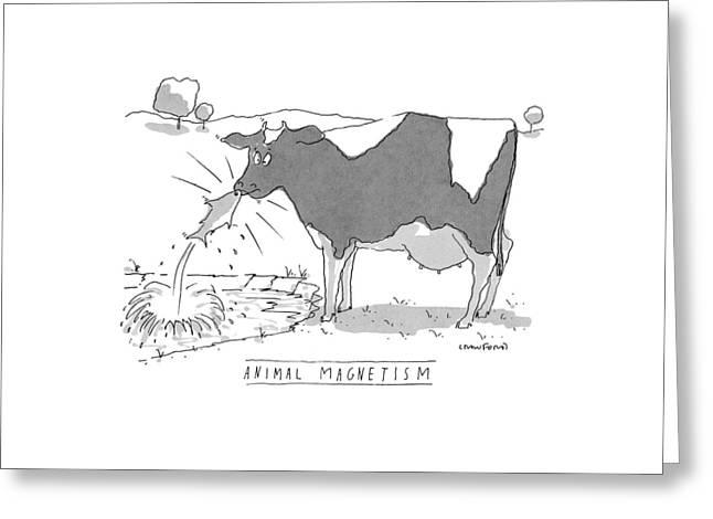 Animal Magnetism Greeting Card by Michael Crawford