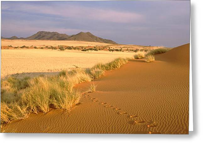 Animal Tracks On The Sand Dunes Towards Greeting Card by Panoramic Images
