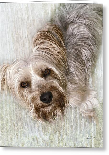 animals - dogs - Rascal Greeting Card by Ann Powell