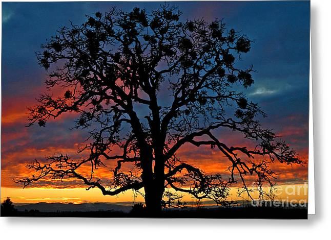 Greeting Card featuring the photograph Ankeny Hill Sunset by Nick  Boren