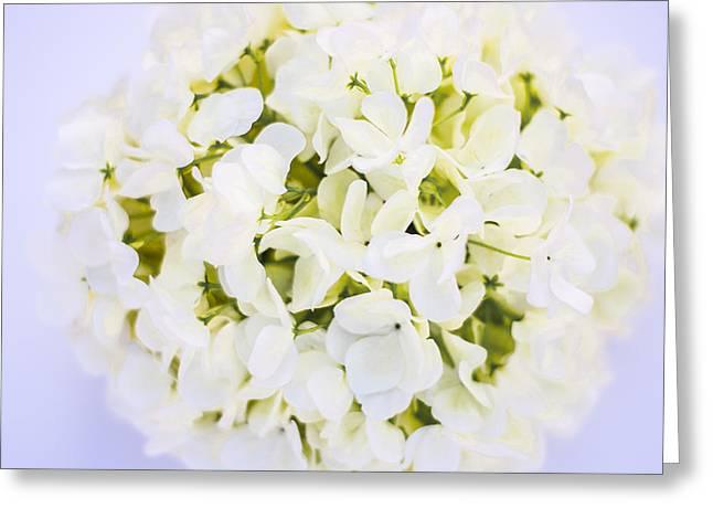 Annabelle Hydrangea Closeup  Greeting Card by Parker Cunningham