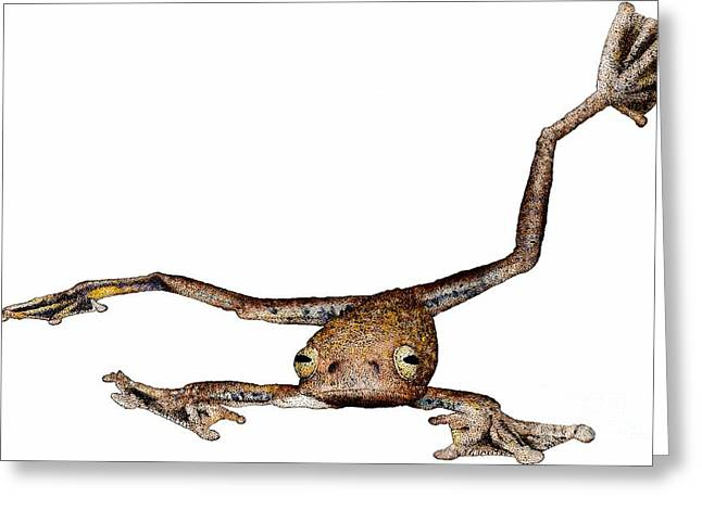 Annam Flying Frog Greeting Card