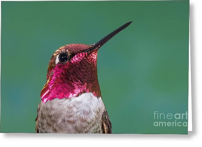 Annas Hummingbird Greeting Card by Anthony Mercieca