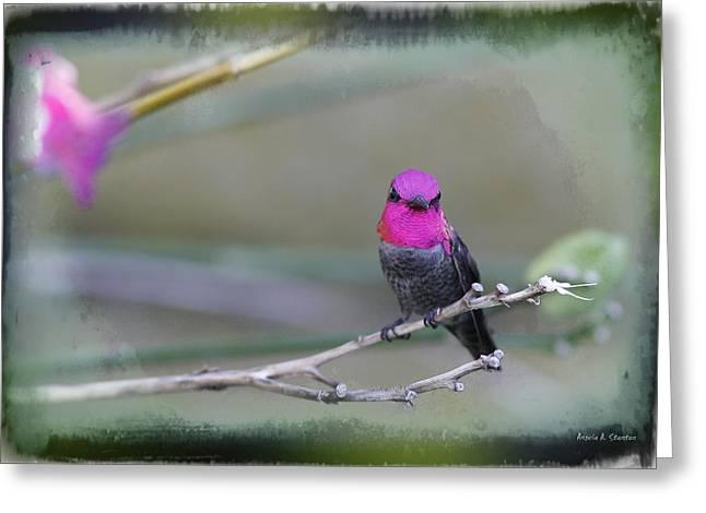 Anna's Hummingbird - Male Greeting Card by Angela A Stanton