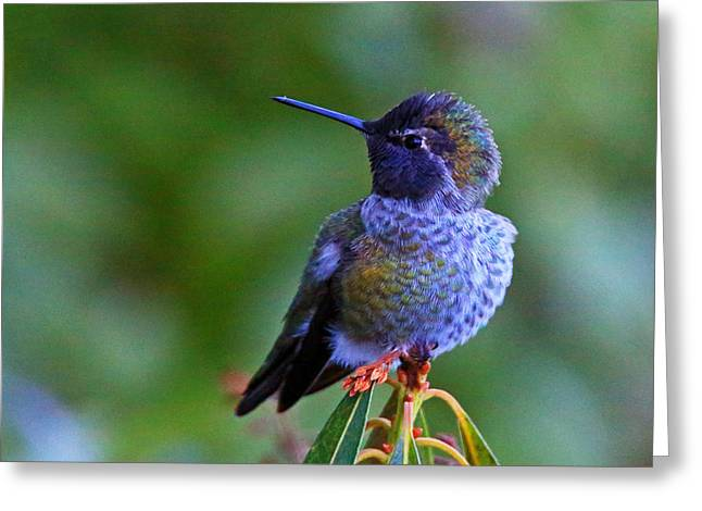 Annas Hummingbird Greeting Card by Randy Hall